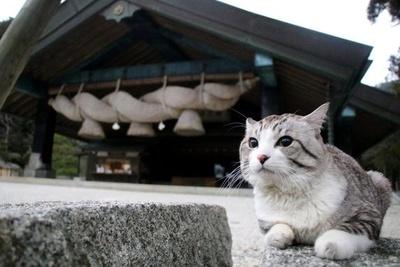 旅猫 ニャン吉の大冒険 / 島根県・出雲大社