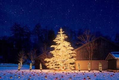 トンボの湯前の「もみの木広場」 に、約10メートルの自然のモミの木によるクリスマスツリーも。記念撮影にぴったり