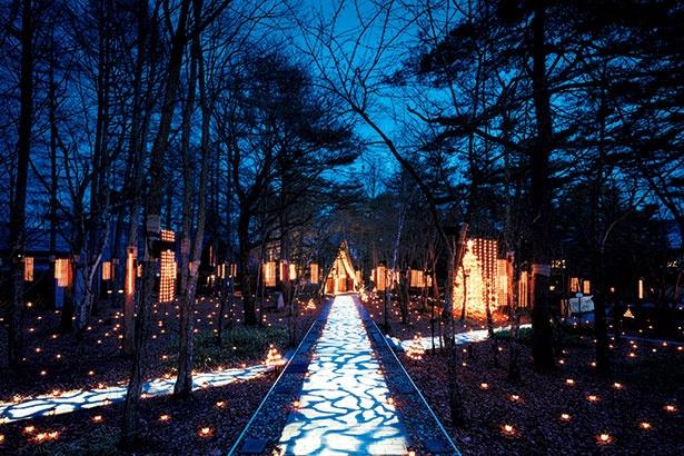 森の中に出現する光の道と、地面にちりばめられたランタンが幻想的