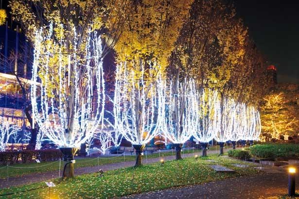 9本の木に約2万個の光が装飾され、大きなシャンパングラスに雫がつたうような「シャンパン・イルミネーション」