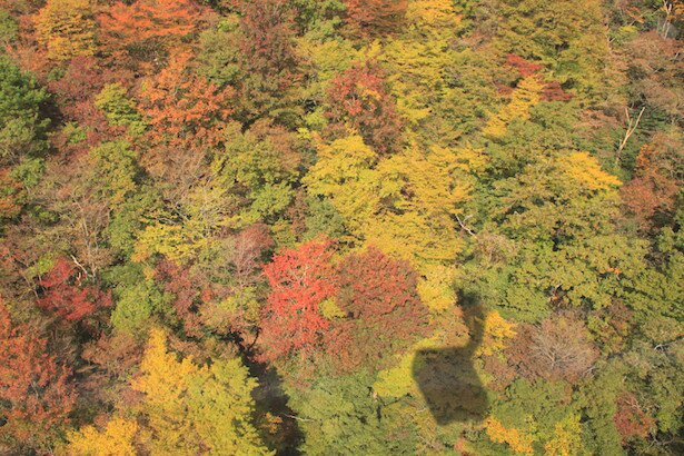 【写真を見る】絨毯のように広がる美しい紅葉