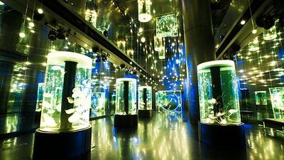 音と光の演出の中でクラゲが漂う大空間もXmas仕様に