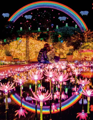 2000輪の光のスイレンがまばゆく光る「光のフラワーステージ」
