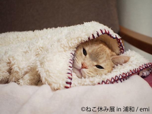 『ねこ休み展』埼玉・浦和で、初開催! 新年に向けて、合格祈願絵馬も登場