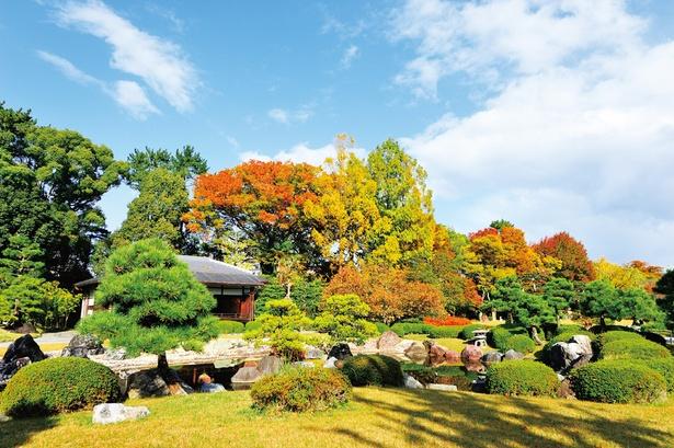 広大な芝生の洋風庭園と池泉回遊式庭園から成る清流園。庭園内をのんびりと歩きながら鮮やかな紅葉を観賞しよう
