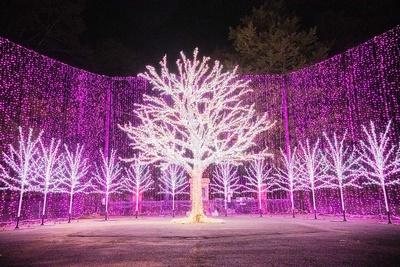 光の桜並木のゴール地点にある大きなイルミ桜。冬の夜空に満開であった