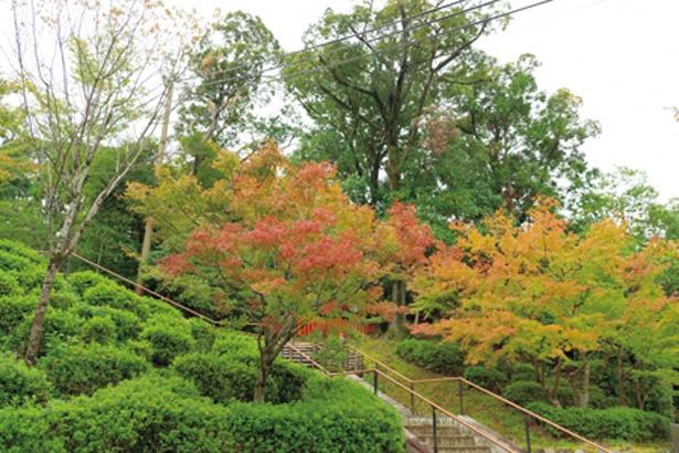 境内の稲荷山は常緑樹が多いものの、山頂付近や啼鳥菴前のキツネ像付近、十石橋など、紅葉が楽しめるポイントが点在しているので要チェック/稲荷茶寮