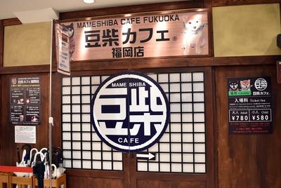 福岡パルコ5階にある豆柴カフェ。和風レトロな雰囲気も素敵