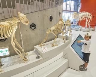福岡・南公園「福岡市動物園」の新しい顔!エントランス施設が誕生