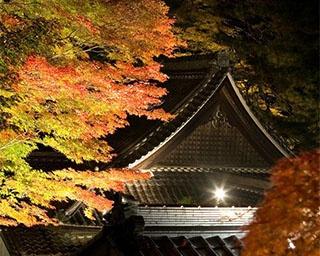 日本三名泉のひとつ・下呂温泉で見る紅葉ライトアップ!岐阜県下呂市で紅葉が見頃