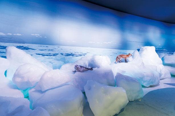 マイナス15℃の流氷体感テラス。ぬれたタオルを凍らせる体験も楽しい!