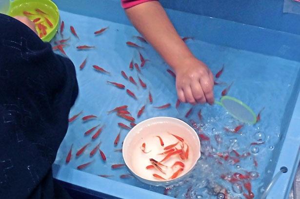 大和郡山市ならではの、金魚のフェスが開催される