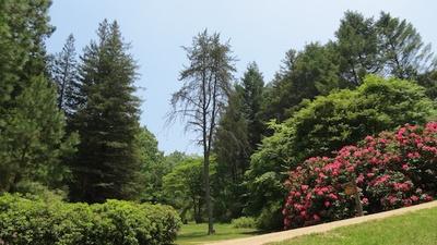 総面積142.6ヘクタールをほこる神戸市立森林植物園(写真は北アメリカ区の風景)