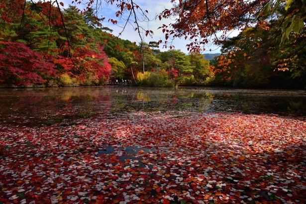 【写真を見る】11月中旬からモミジなどが赤く色づきはじめる