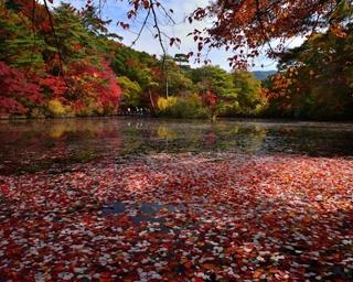 森のライトアップも開催中!神戸市立森林植物園が紅葉の見頃に