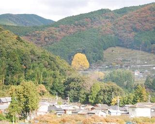 樹齢400年の大銀杏が魅せる黄金色!福定の大銀杏が紅葉の見頃に