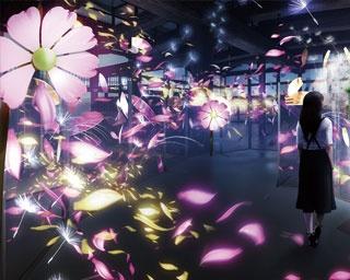 近付くと香りがするコスモスの空間演出を重要文化財の台所で実施する/秋季特別ライトアップ FLOWERS BY NAKED 2018 -京都・二条城-
