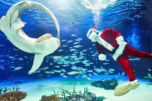 サンタとトナカイの格好をしたダイバーが登場する水中パフォーマンスタイム 「サンタダイブ」