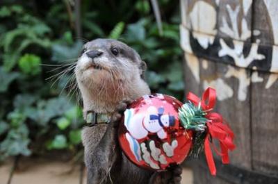 サンシャイン水族館ではクリスマスバージョンのパフォーマンスやチンアナゴのクリスマスケーキ販売などが行われる
