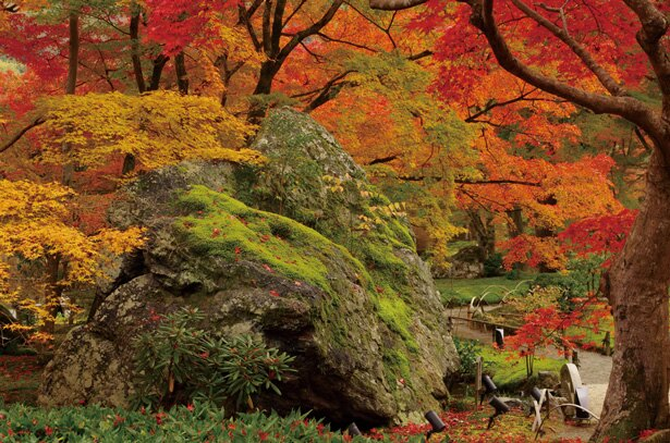 獅子吼の庭は、室町時代に中国に2度渡った禅僧・策彦周良禅師によって作庭された/天龍寺塔頭 宝厳院