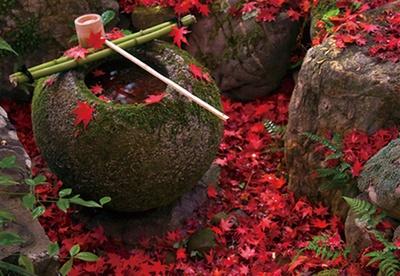 苔むした庭園に紅葉がじゅうたんのように/厭離庵