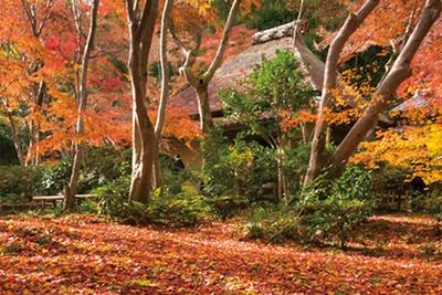 苔庭をおおう紅葉は圧巻/祇王寺