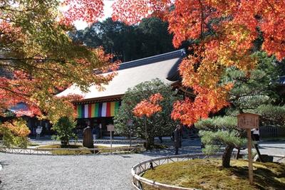鮮やかな紅葉に包まれる本堂/二尊院
