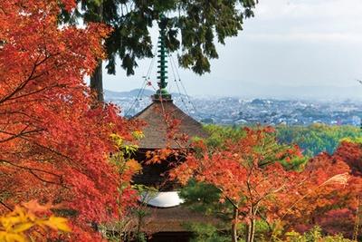 重要文化財の多宝塔周辺からは、紅葉だけでなく市街も見渡せる/常寂光寺