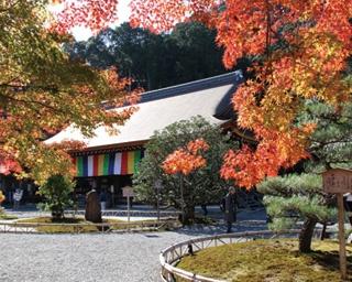 京都嵐山エリアならでは!広大な紅葉×名刹を巡る秋の日帰りプラン