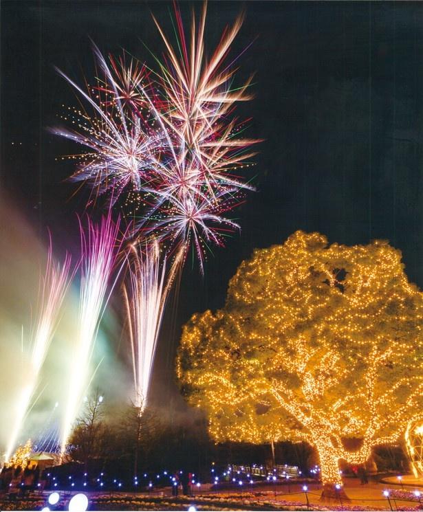 【写真を見る】東海エリアの冬花火はこちら!「安城産業文化公園 デンパーク ウィンターフェスティバル」