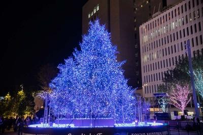 Starlight Treeを中心とした周囲の木々もイルミネーションされている