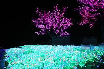 光の花畑が7色に変化