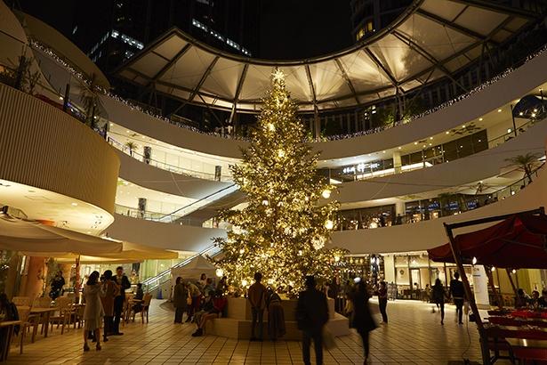 本物のモミの木にシャンパンゴールドの光が輝く横浜ベイクォーターのイルミネーション