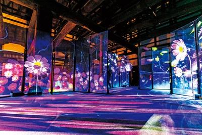 コスモスの前に立つと花の香りと花びらに包まれ、タンポポに息を吹きかけると美しい綿毛が舞い上がるインタラクション/秋季特別ライトアップBY NAKED2018ー京都・二条城ー