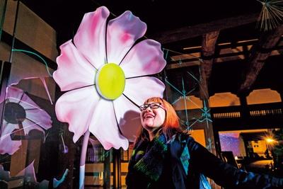 【写真をみる】コスモスの前に立つと芳香と共に花びらが舞い散る/秋季特別ライトアップBY NAKED2018ー京都・二条城ー