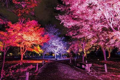 初めての紅葉ライトアップを楽しめるエリア/秋季特別ライトアップBY NAKED2018ー京都・二条城ー