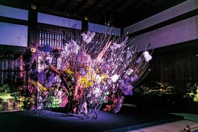 華道家元池坊とFLOWERS BY NAKEDの初コラボ作品「秋嵐」/秋季特別ライトアップBY NAKED2018ー京都・二条城ー