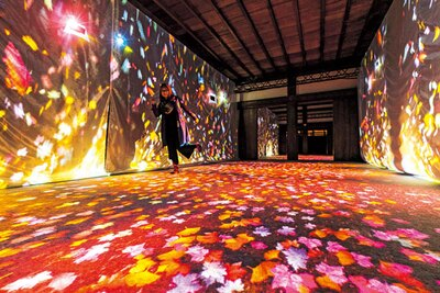 歩いた所に紅葉した葉が舞い散り、空間全体に映像が広がるインタラクションの小径「落ち葉の小径」/秋季特別ライトアップBY NAKED2018ー京都・二条城ー