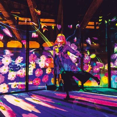 「秋桜と蒲公英」の光が一番舞っているタイミングに合わせて撮影を/秋季特別ライトアップBY NAKED2018ー京都・二条城ー