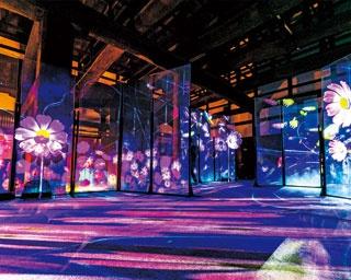 """通算30万人動員の""""NAKEDのアート展""""が二条城で初開催!世界遺産が幻想的なアートに"""