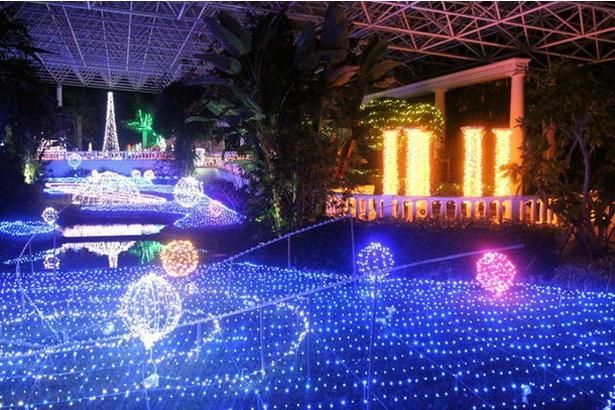 ウィンターフェスティバル フラワーパーク イルミネーション 2018(鹿児島県指宿市) / 夜の植物園で約30万球の電飾が彩る光の世界を堪能