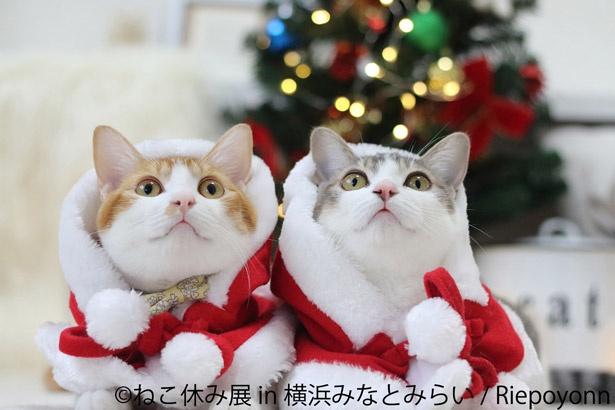 【写真を見る】クリスマスは愛くるしいネコたちに癒やされよう
