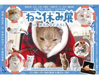 「ねこ休み展」1年ぶりに横浜で開催!