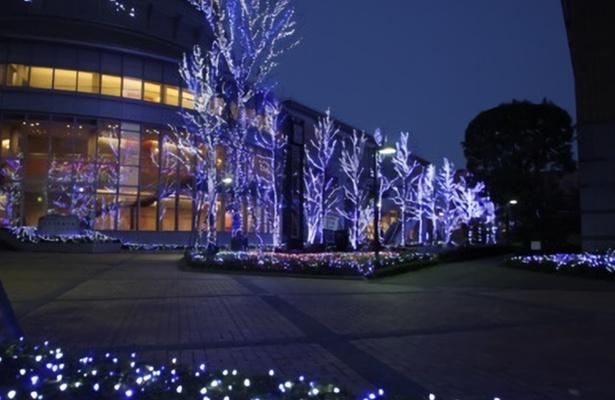 【写真を見る】徳島文理大学の冬の風物詩「文理ナリエ」