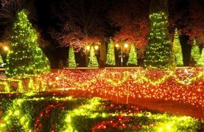 クリスマスカラーな彩りが一層ロマンチックな雰囲気を醸し出す