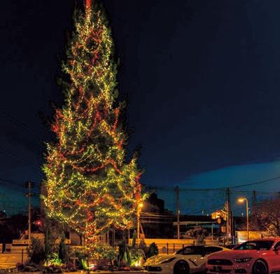 本物のモミの木を生かす巨大ツリーは、温かみあふれる光に/赤レンガ倉庫クラッシックイルミネーション