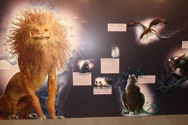 魔法動物たちの詳しい解説がついたパネル