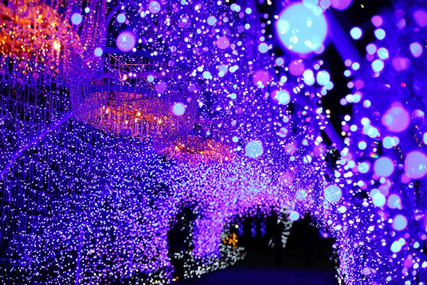 江の島サムエル・コッキング苑は光のトンネルが幻想的