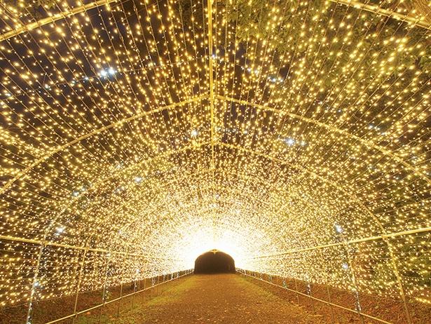 まばゆい光に包まれる「光のトンネル」