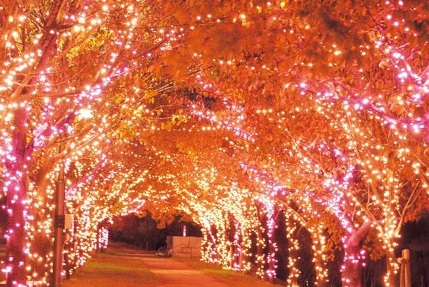 【写真を見る】狭山池北堤の桜並木に光の花を咲かせる。家族や恋人、友人たちと一緒に、夜空にきらめく神秘的な冬の桜を堪能あれ/桜まつり〜冬〜大阪狭山イルミネーション